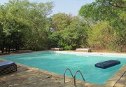 Bird Safari Camp - Swimming pool
